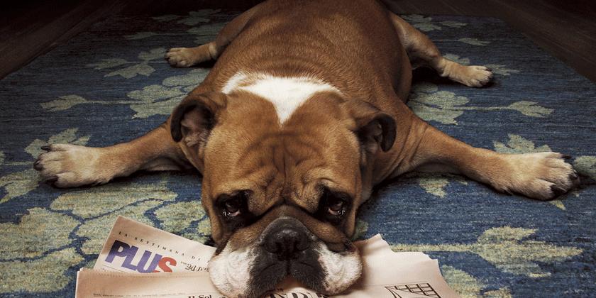 Je vaš pasji ljubljenček rojen v astrološkem znamenju bika?