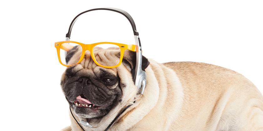 Značilnosti in karakteristike psa in psičke, rojena v znamenju dvojčkov.