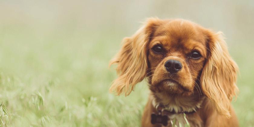 Je vaš pes ali psička rojena v znamenju kozoroga? Preverite lastnosti kozoroga.