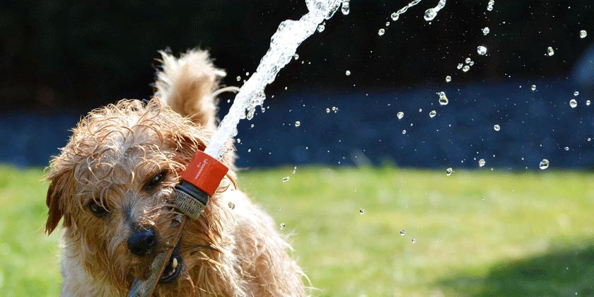 Vas zanimajo lastnosti psička in psičke rojena v znamenju vodnarja?
