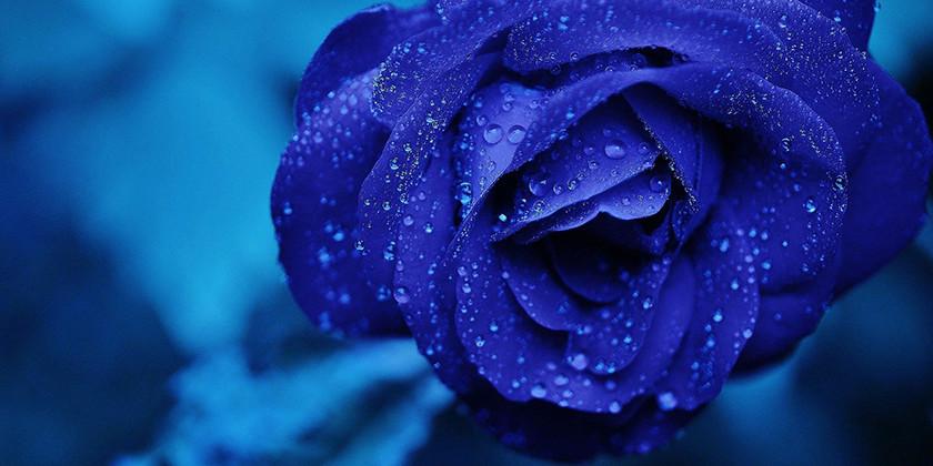 Modra barva je kot modrost in svežina