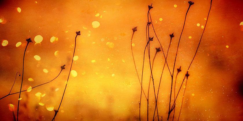 Oranžna barva, njena toplina in pomen