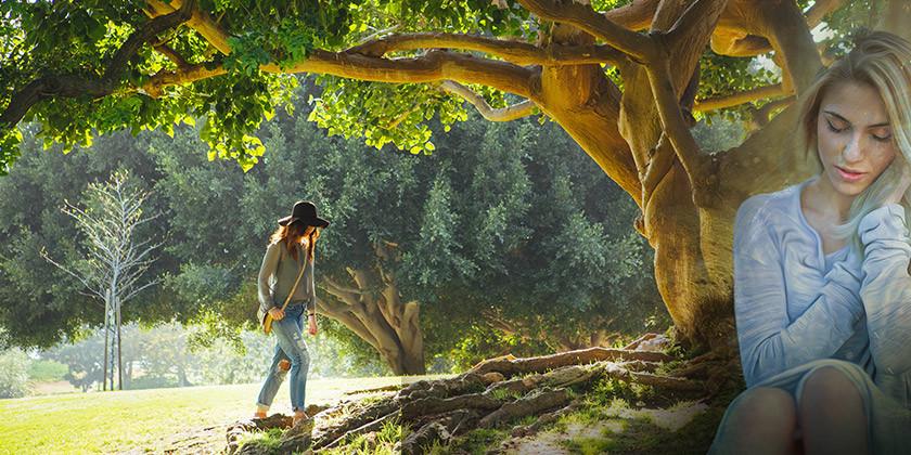 Katero drevo bi morali večkrat objeti?
