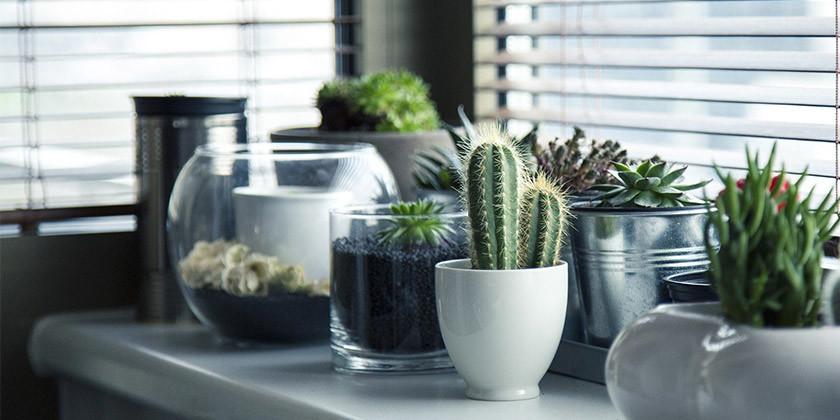 Katera sobna rastlina je najbolj primerna za vaše astrološko znamenje?