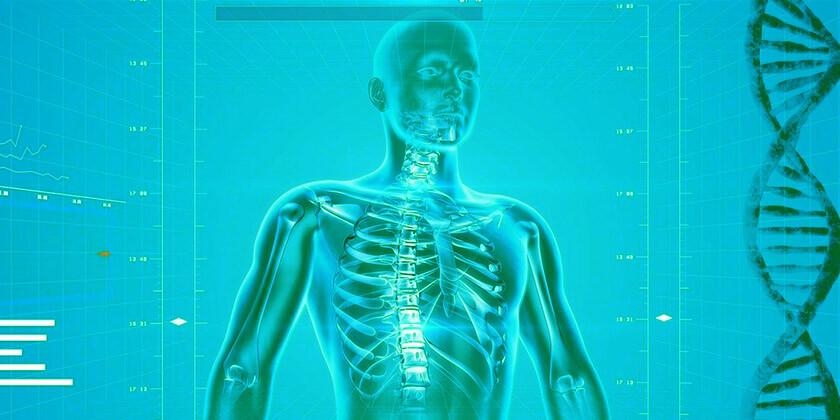 Poskrbite za zdravje: Mreža organov, ki so še kako pomembni