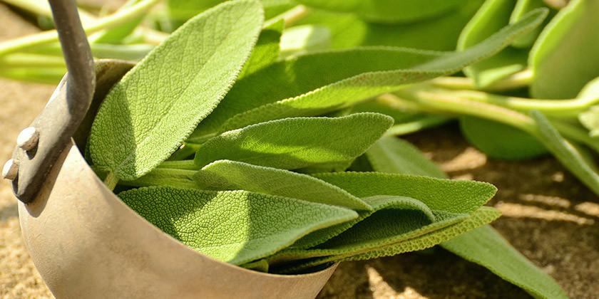 Žajbelj, čudežna rastlina in njene koristi za boljše počutje