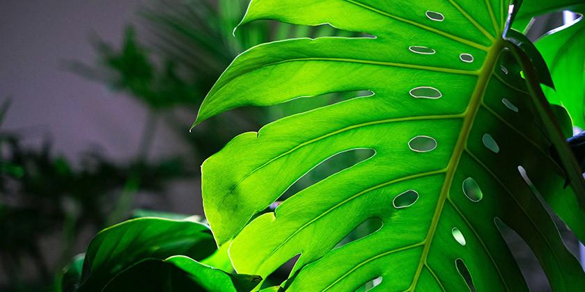 Zelena barva: kakšen je tip vaše osebnosti, če ste rojeni v znamenju bik, kozoroga in rib?