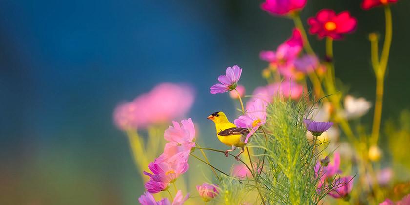 Gregorjevo, dan ko se ptički ženijo ter duhovni pomen ptice