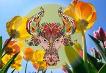 Kakšen je vpliv Sonca v znamenju bika na vaše življenje?