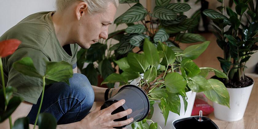 Poznate sobne rastline, ki pripomorejo k čistejšemu zraku v vašem domu?